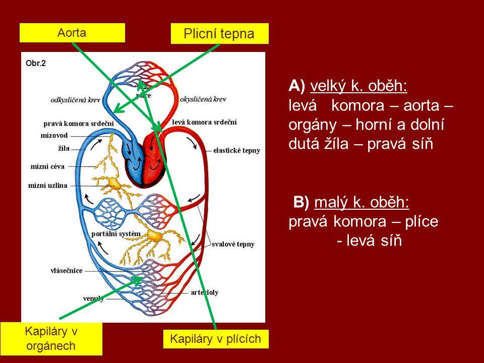 A) velký k. oběh: levá komora – aorta – orgány – horní a dolní dutá žíla – pravá síň B) malý k.