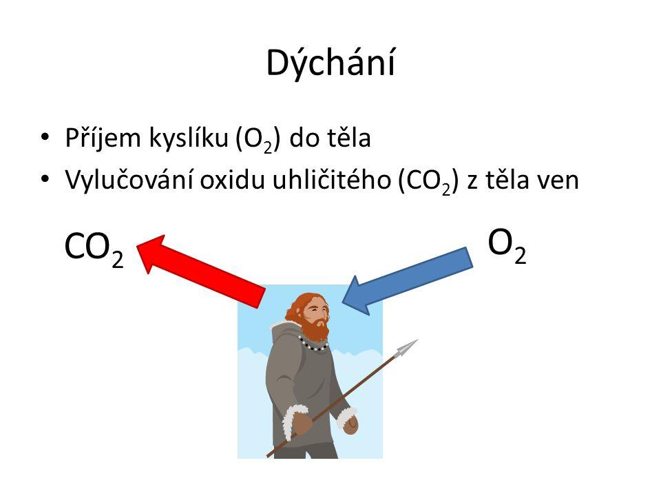 Dýchání Příjem kyslíku (O 2 ) do těla Vylučování oxidu uhličitého (CO 2 ) z těla ven O2O2 CO 2