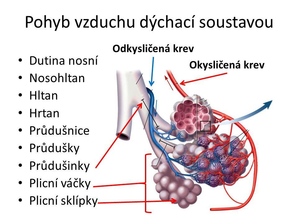 Pohyb vzduchu dýchací soustavou Dutina nosní Nosohltan Hltan Hrtan Průdušnice Průdušky Průdušinky Plicní váčky Plicní sklípky Okysličená krev Odkyslič