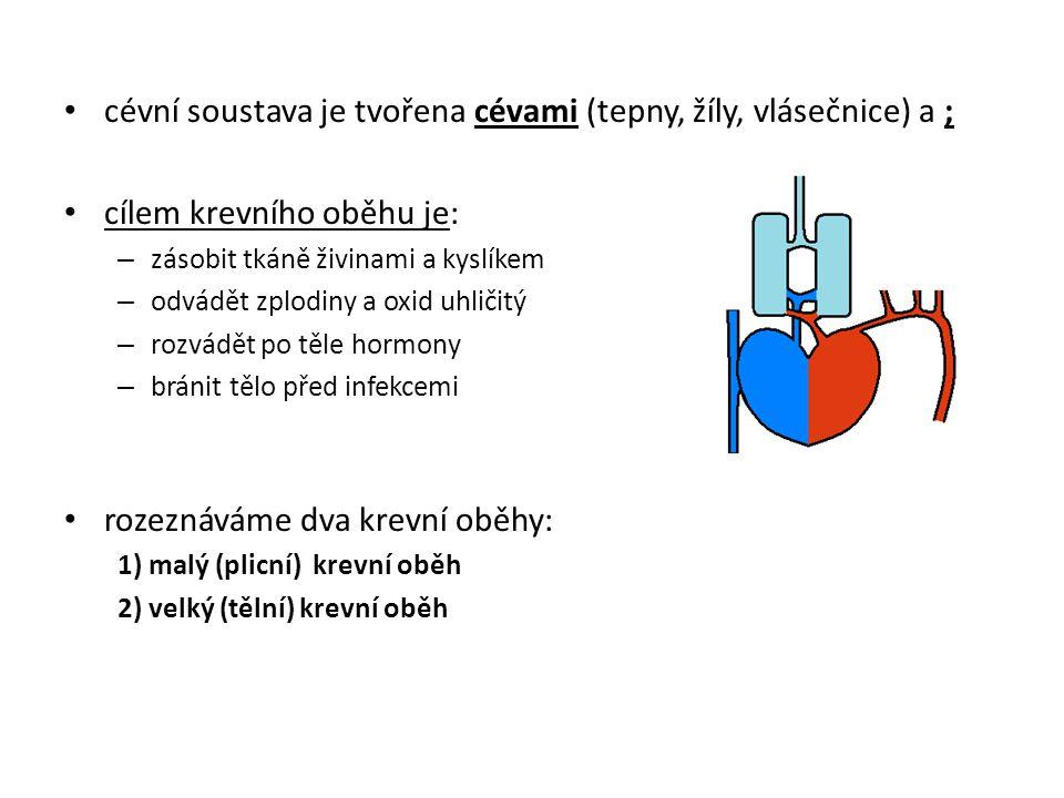 cévní soustava je tvořena cévami (tepny, žíly, vlásečnice) a ; cílem krevního oběhu je: – zásobit tkáně živinami a kyslíkem – odvádět zplodiny a oxid uhličitý – rozvádět po těle hormony – bránit tělo před infekcemi rozeznáváme dva krevní oběhy: 1) malý (plicní) krevní oběh 2) velký (tělní) krevní oběh