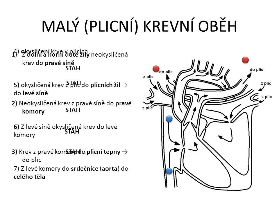 MALÝ (PLICNÍ) KREVNÍ OBĚH 1)Z dolní a horní duté žíly neokysličená krev do pravé síně STAH 2) Neokysličená krev z pravé síně do pravé komory STAH 3) Krev z pravé komory do plicní tepny → do plic 4) okysličení krve v plicích STAH 5) okysličená krev z plic do plicních žil → do levé síně STAH 6) Z levé síně okysličená krev do levé komory STAH 7) Z levé komory do srdečnice (aorta) do celého těla