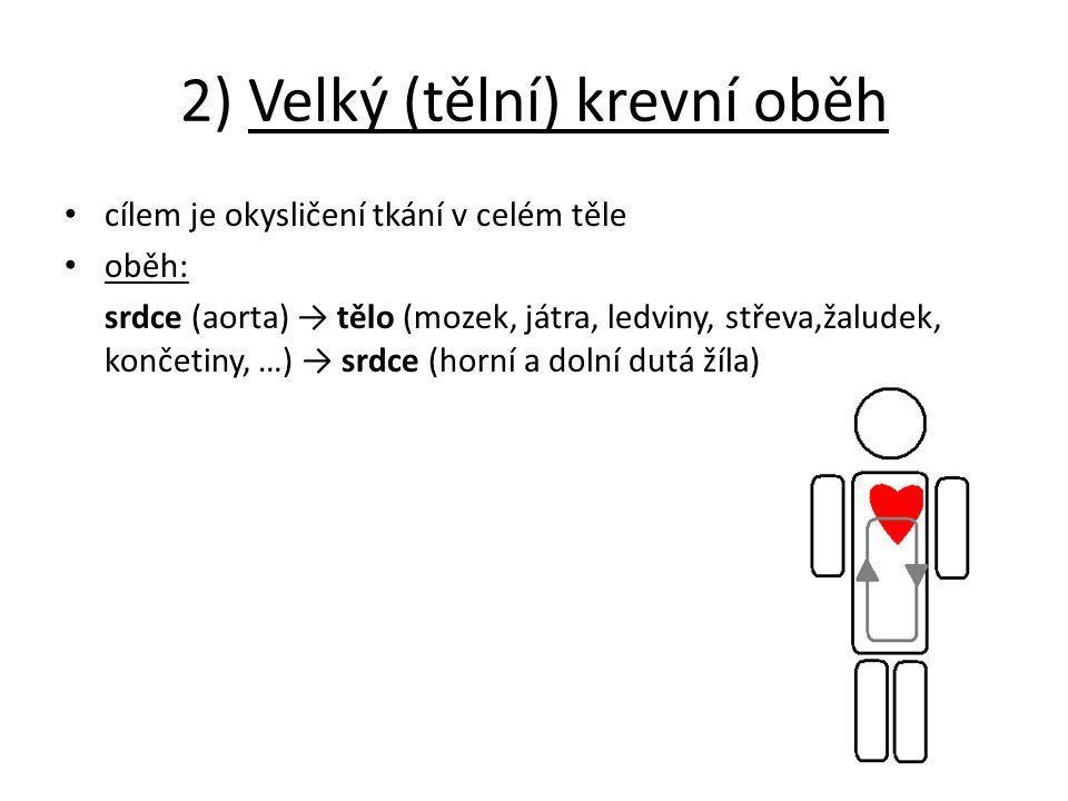 2) Velký (tělní) krevní oběh cílem je okysličení tkání v celém těle oběh: srdce (aorta) → tělo (mozek, játra, ledviny, střeva,žaludek, končetiny, …) → srdce (horní a dolní dutá žíla)