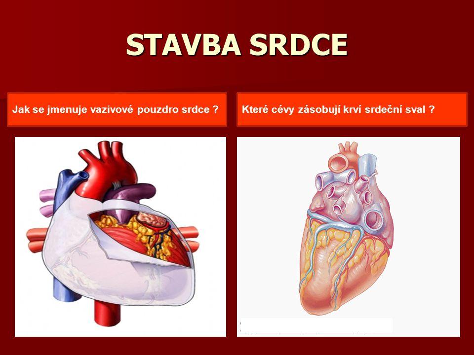 STAVBA SRDCE Které cévy zásobují krví srdeční sval ?Jak se jmenuje vazivové pouzdro srdce ?