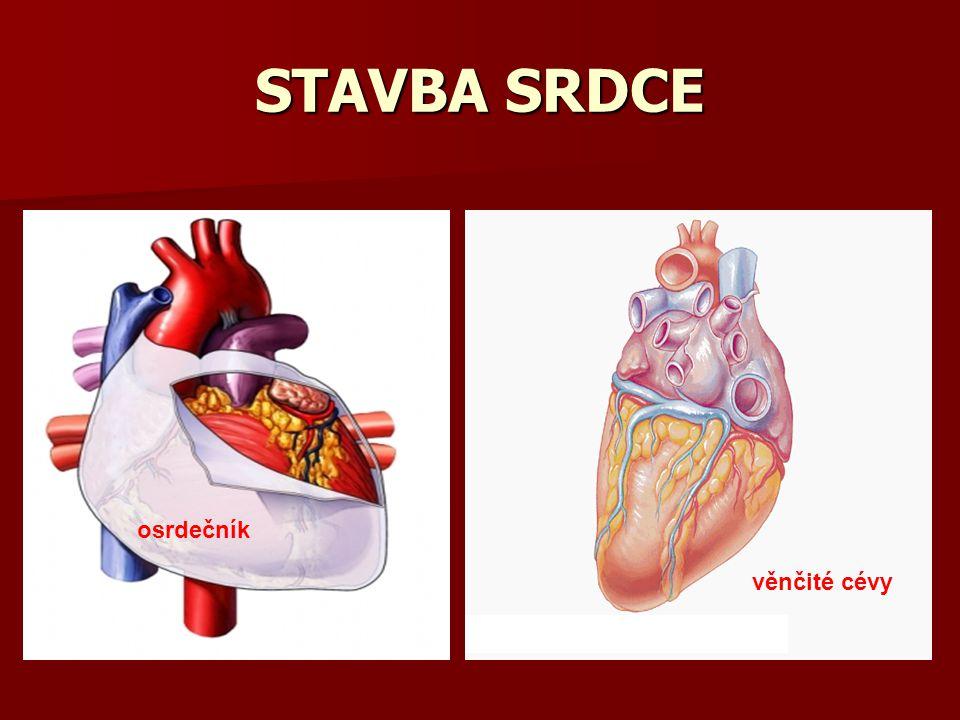 STAVBA SRDCE osrdečník věnčité cévy