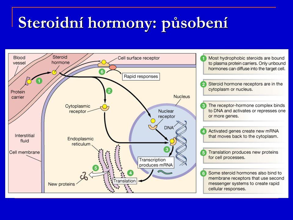 Steroidní hormony: působení