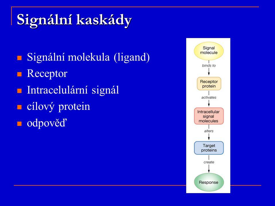 Signální kaskády Signální molekula (ligand) Receptor Intracelulární signál cílový protein odpověď