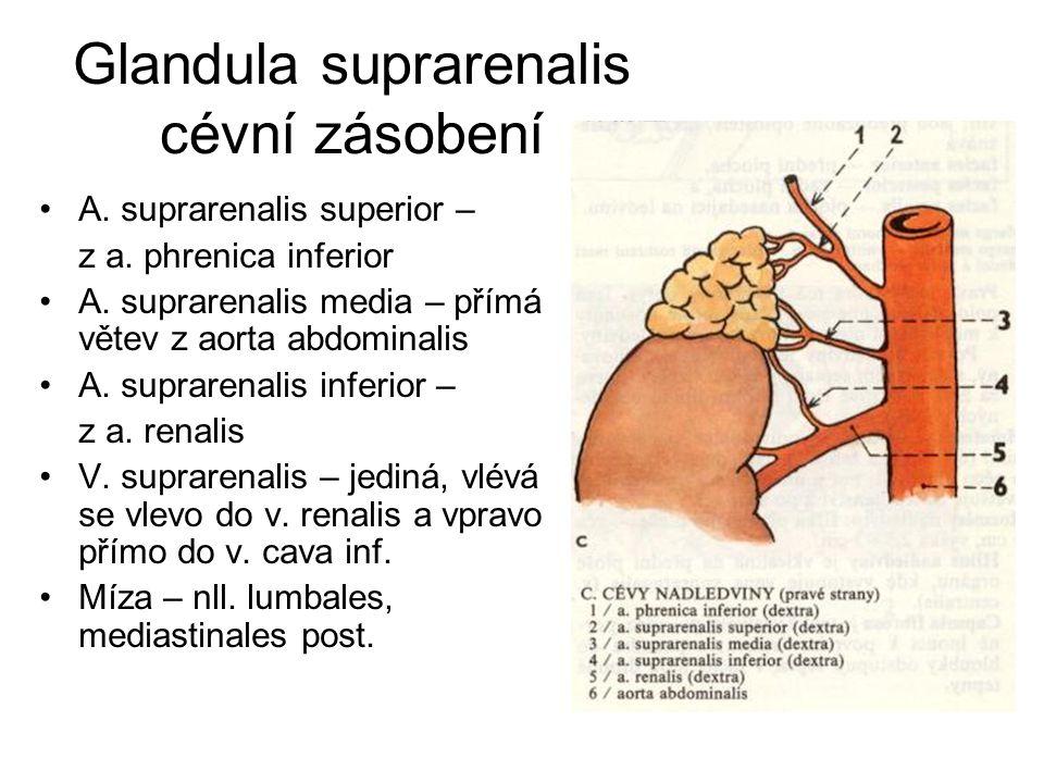 Glandula suprarenalis cévní zásobení A. suprarenalis superior – z a. phrenica inferior A. suprarenalis media – přímá větev z aorta abdominalis A. supr
