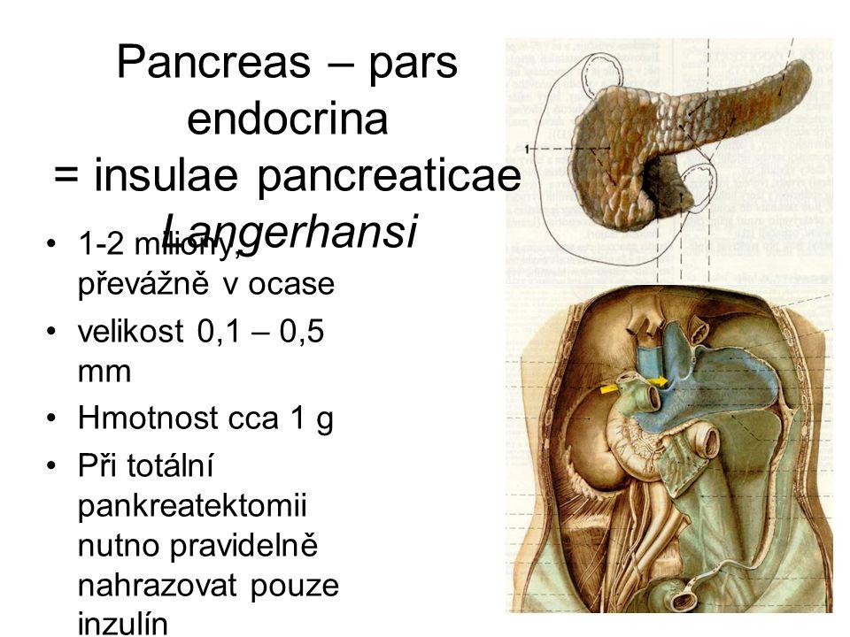 Pancreas – pars endocrina = insulae pancreaticae Langerhansi 1-2 miliony, převážně v ocase velikost 0,1 – 0,5 mm Hmotnost cca 1 g Při totální pankreat