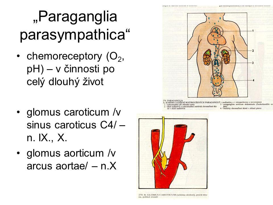 """""""Paraganglia parasympathica"""" chemoreceptory (O 2, pH) – v činnosti po celý dlouhý život glomus caroticum /v sinus caroticus C4/ – n. IX., X. glomus ao"""