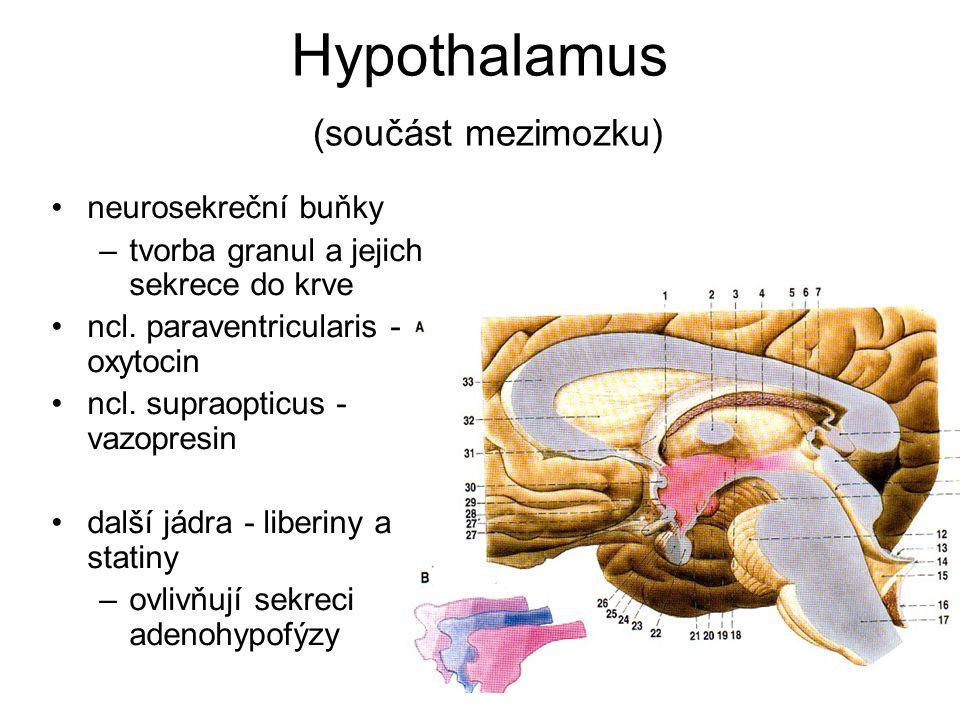 Hypothalamus (součást mezimozku) neurosekreční buňky –tvorba granul a jejich sekrece do krve ncl. paraventricularis - oxytocin ncl. supraopticus - vaz