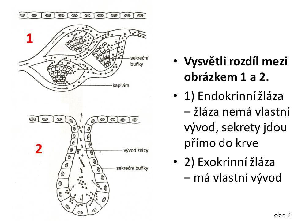Vysvětli rozdíl mezi obrázkem 1 a 2. 1) Endokrinní žláza – žláza nemá vlastní vývod, sekrety jdou přímo do krve 2) Exokrinní žláza – má vlastní vývod