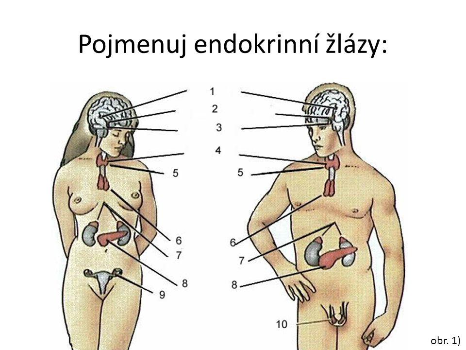Pojmenuj endokrinní žlázy: obr. 1)