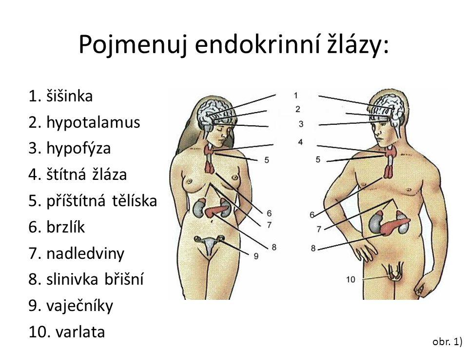 Pojmenuj endokrinní žlázy: 1. šišinka 2. hypotalamus 3. hypofýza 4. štítná žláza 5. příštítná tělíska 6. brzlík 7. nadledviny 8. slinivka břišní 9. va