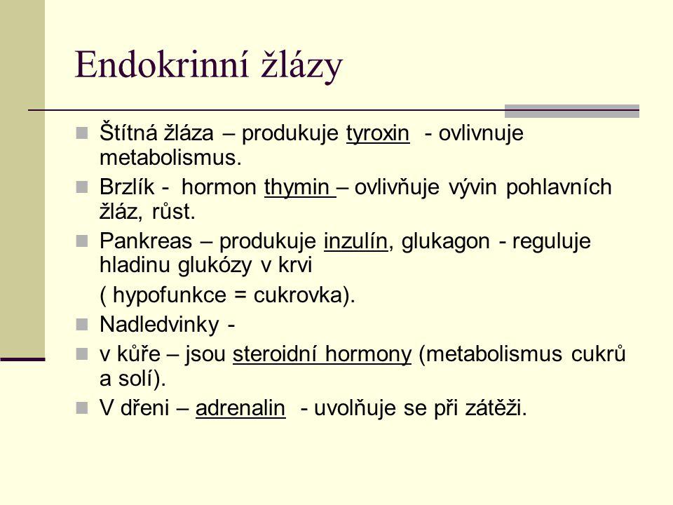 Endokrinní žlázy Šišinka – epifýza – nejmenší a nejméně prozkoumaná – hormon – melatonin - tvorba pohlavních orgánů.