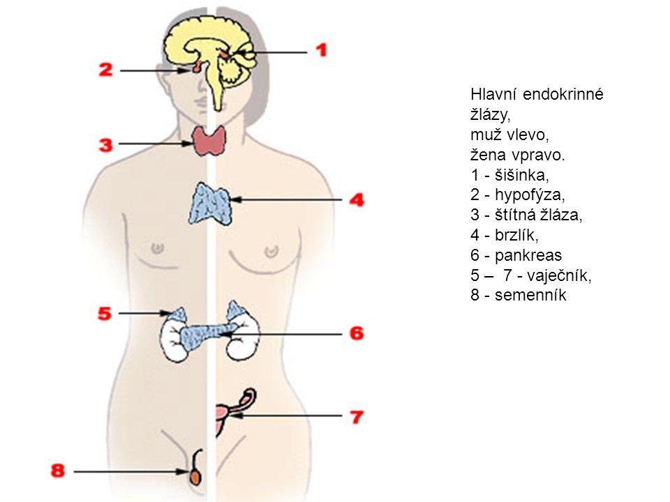 Otázky a odpovědi 1.Kam se vylučují hormony. Do krve.