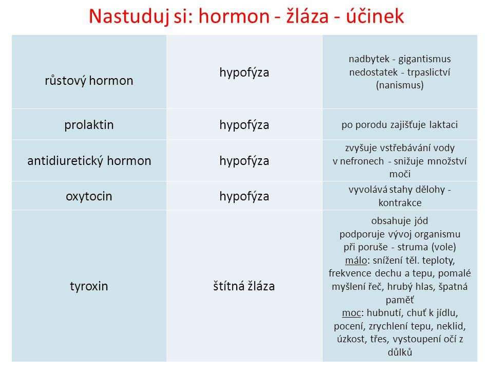 Nastuduj si: hormon - žláza - účinek růstový hormon hypofýza nadbytek - gigantismus nedostatek - trpaslictví (nanismus) prolaktinhypofýza po porodu zajišťuje laktaci antidiuretický hormonhypofýza zvyšuje vstřebávání vody v nefronech - snižuje množství moči oxytocinhypofýza vyvolává stahy dělohy - kontrakce tyroxinštítná žláza obsahuje jód podporuje vývoj organismu při poruše - struma (vole) málo: snížení těl.
