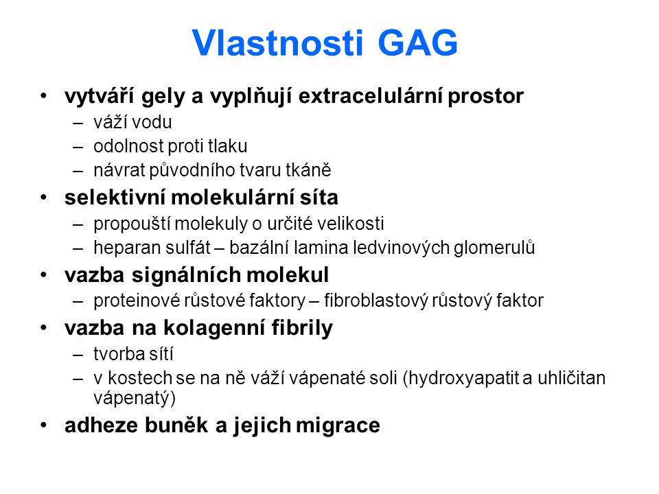 Vlastnosti GAG vytváří gely a vyplňují extracelulární prostor –váží vodu –odolnost proti tlaku –návrat původního tvaru tkáně selektivní molekulární sí
