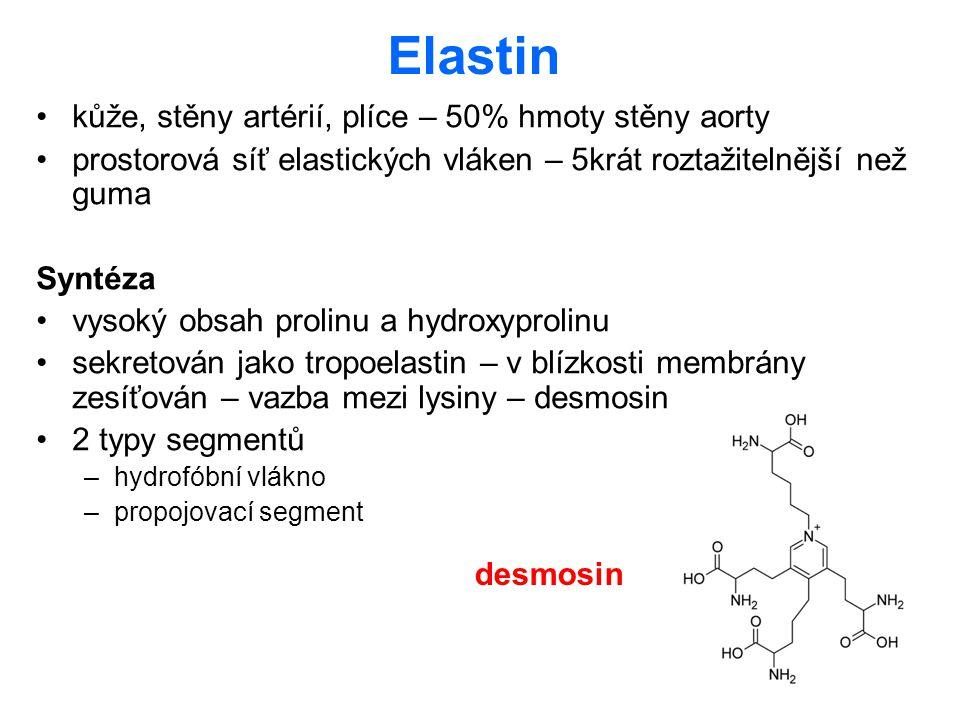 Elastin kůže, stěny artérií, plíce – 50% hmoty stěny aorty prostorová síť elastických vláken – 5krát roztažitelnější než guma Syntéza vysoký obsah pro