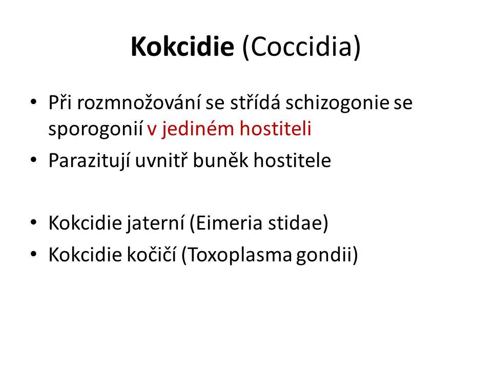 Kokcidie (Coccidia) Při rozmnožování se střídá schizogonie se sporogonií v jediném hostiteli Parazitují uvnitř buněk hostitele Kokcidie jaterní (Eimeria stidae) Kokcidie kočičí (Toxoplasma gondii)