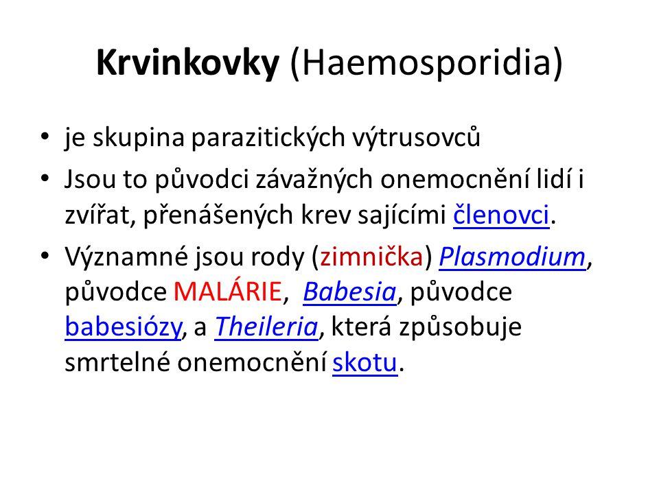 Krvinkovky (Haemosporidia) je skupina parazitických výtrusovců Jsou to původci závažných onemocnění lidí i zvířat, přenášených krev sajícími členovci.členovci Významné jsou rody (zimnička) Plasmodium, původce MALÁRIE, Babesia, původce babesiózy, a Theileria, která způsobuje smrtelné onemocnění skotu.PlasmodiumBabesia babesiózyTheileriaskotu
