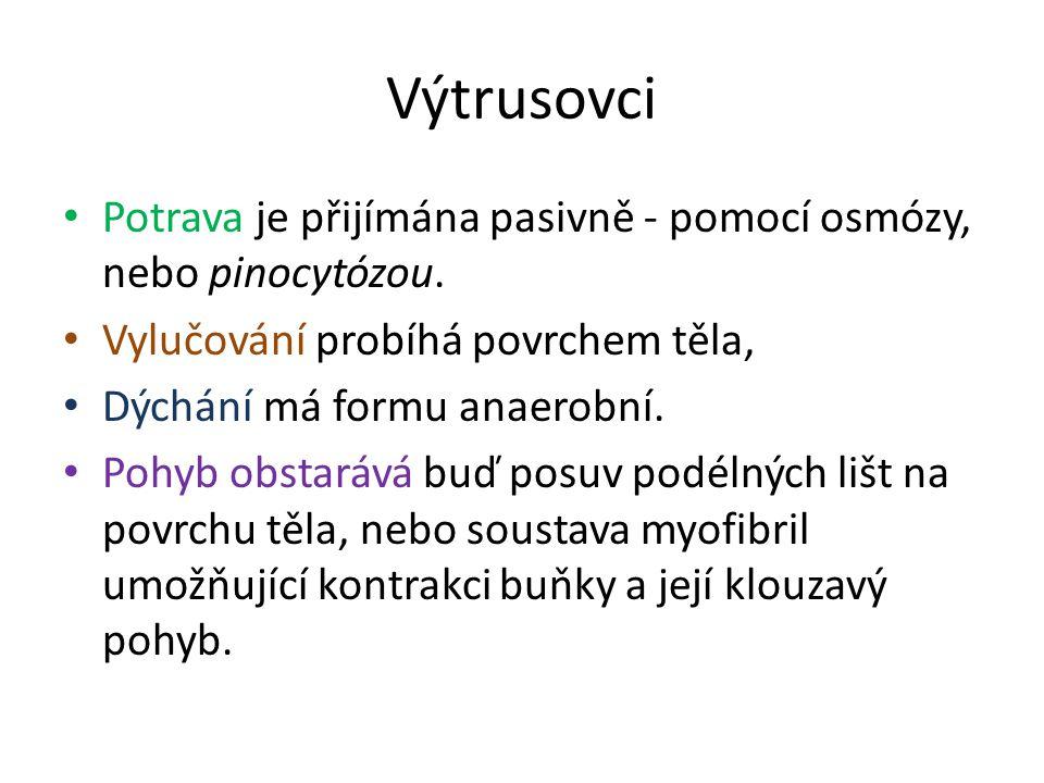 Výtrusovci Potrava je přijímána pasivně - pomocí osmózy, nebo pinocytózou.