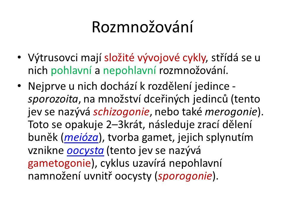 Výtrusovci (Sporozoa, Apicomplexa) Hromadinky (Gregarinia) Hromadinky Kokcidie (Coccidia) Kokcidie Krvinkovky (Haemosporidia) Krvinkovky