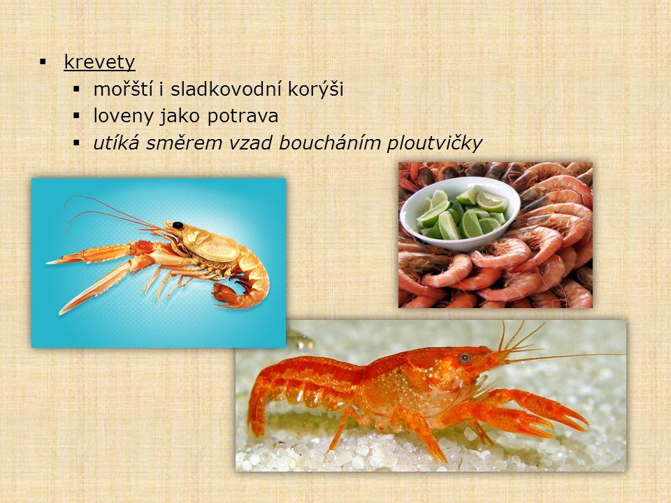  krevety  mořští i sladkovodní korýši  loveny jako potrava  utíká směrem vzad boucháním ploutvičky