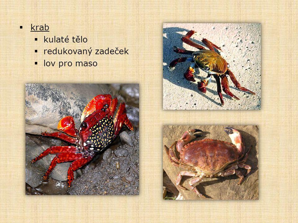  krab  kulaté tělo  redukovaný zadeček  lov pro maso