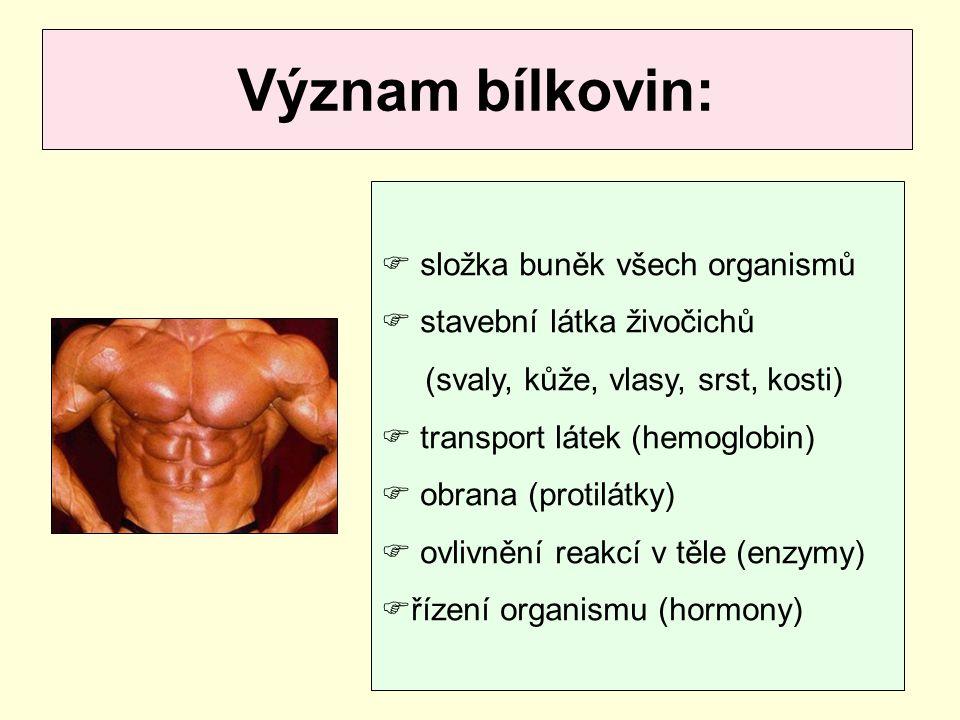 Význam bílkovin:  složka buněk všech organismů  stavební látka živočichů (svaly, kůže, vlasy, srst, kosti)  transport látek (hemoglobin)  obrana (