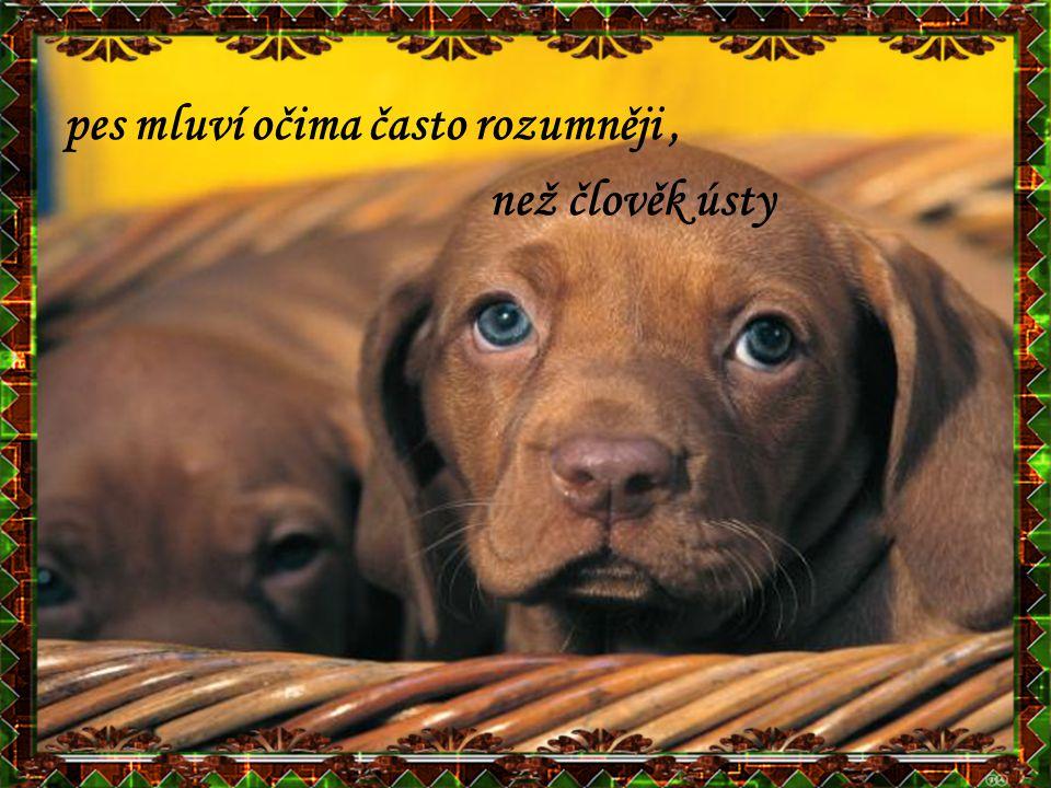 pes mluví očima často rozumněji, než člověk ústy