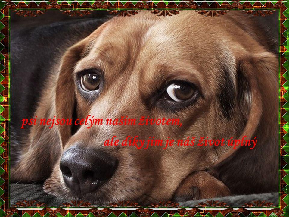 psi nejsou celým našim životem, ale díky jim je náš život úplný