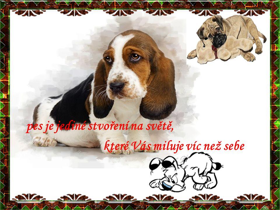 pes je jediné stvoření na světě, které Vás miluje víc než sebe
