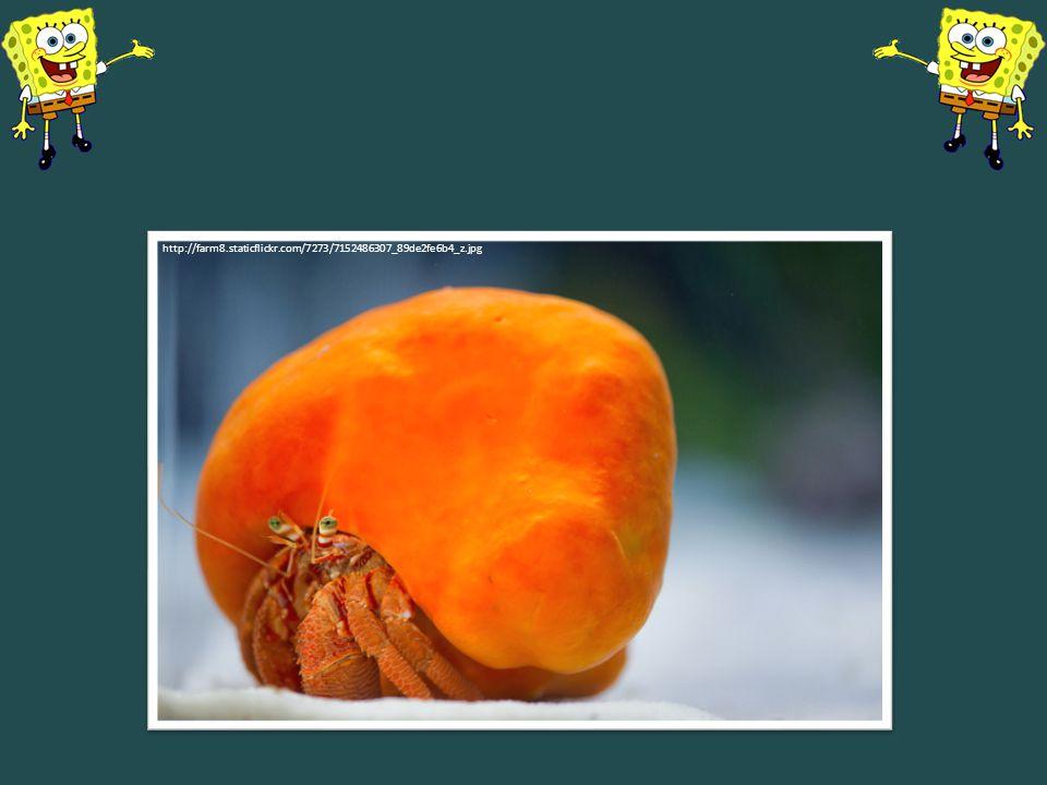 Houba domečková http://farm8.staticflickr.com/7273/7152486307_89de2fe6b4_z.jpg