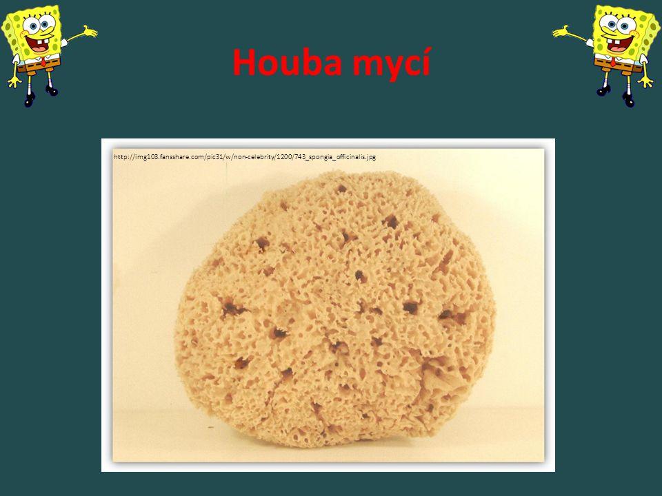 Houba mycí http://img103.fansshare.com/pic31/w/non-celebrity/1200/743_spongia_officinalis.jpg