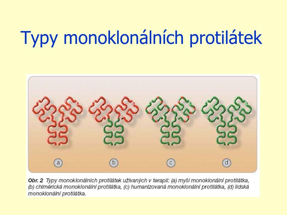 Typy monoklonálních protilátek