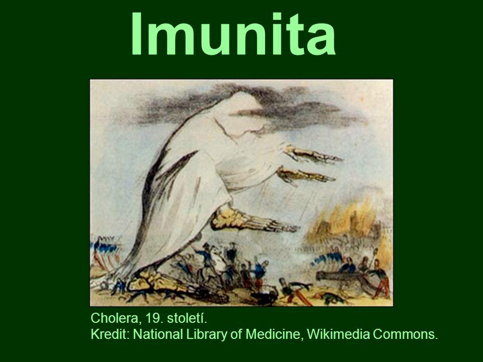 Imunita schopnost organismu bránit se antigenům, čili cizorodým látkám nebo buňkám imunita spouští imunitní odpověď Červená krvinka, krevní destička a bílá krvinka.