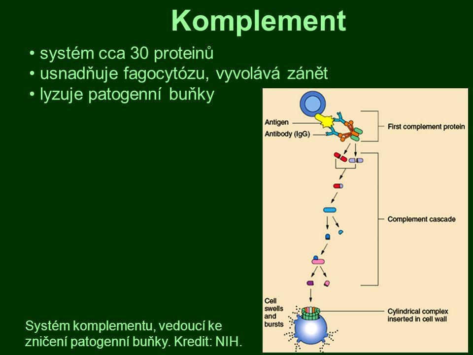 Komplement systém cca 30 proteinů usnadňuje fagocytózu, vyvolává zánět lyzuje patogenní buňky Systém komplementu, vedoucí ke zničení patogenní buňky.