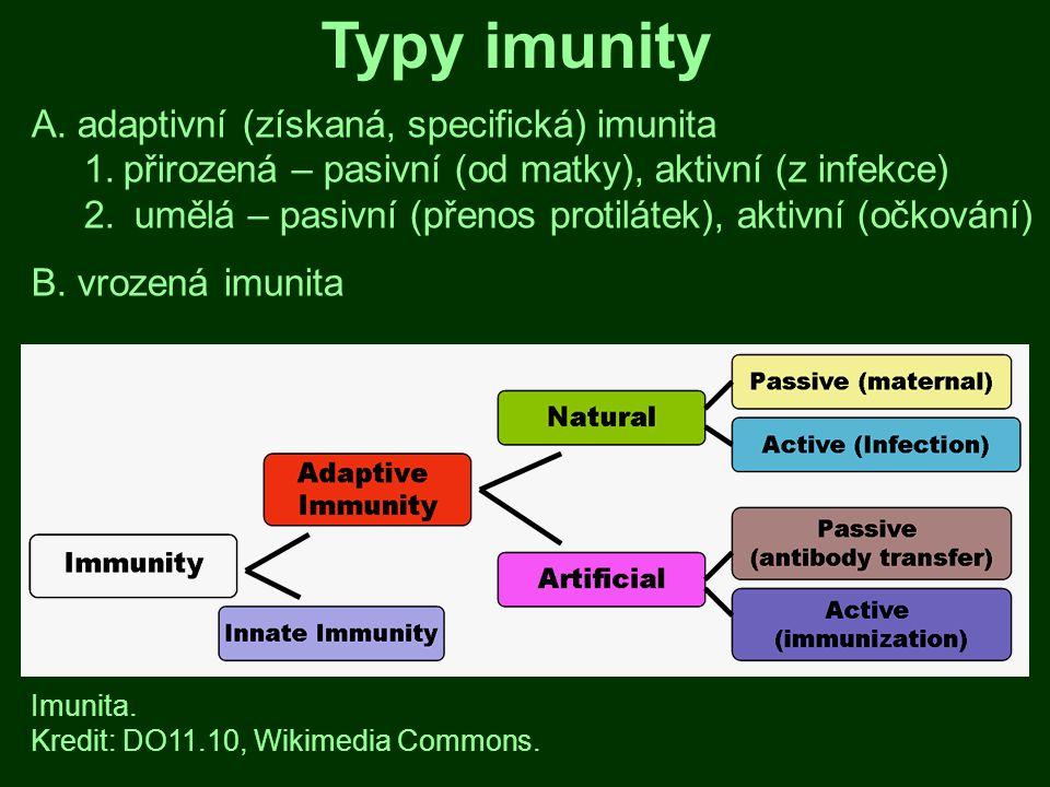 Typy imunity A. adaptivní (získaná, specifická) imunita 1.přirozená – pasivní (od matky), aktivní (z infekce) 2. umělá – pasivní (přenos protilátek),