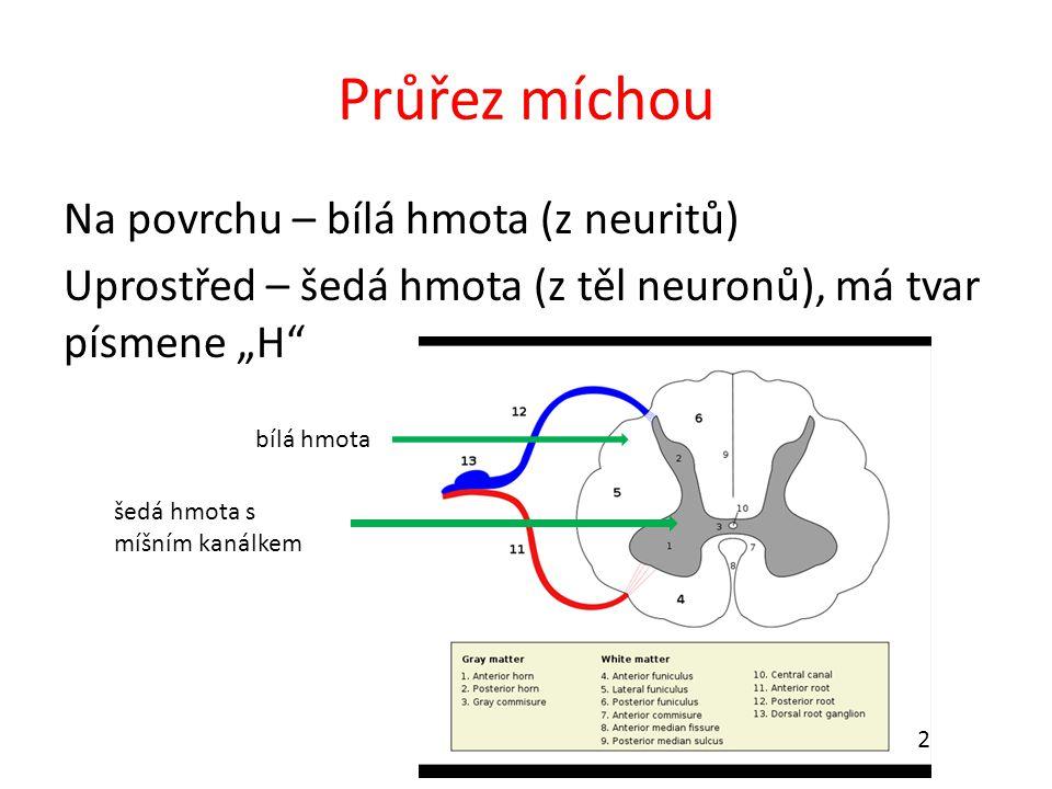 """Průřez míchou Na povrchu – bílá hmota (z neuritů) Uprostřed – šedá hmota (z těl neuronů), má tvar písmene """"H šedá hmota s míšním kanálkem bílá hmota 2"""