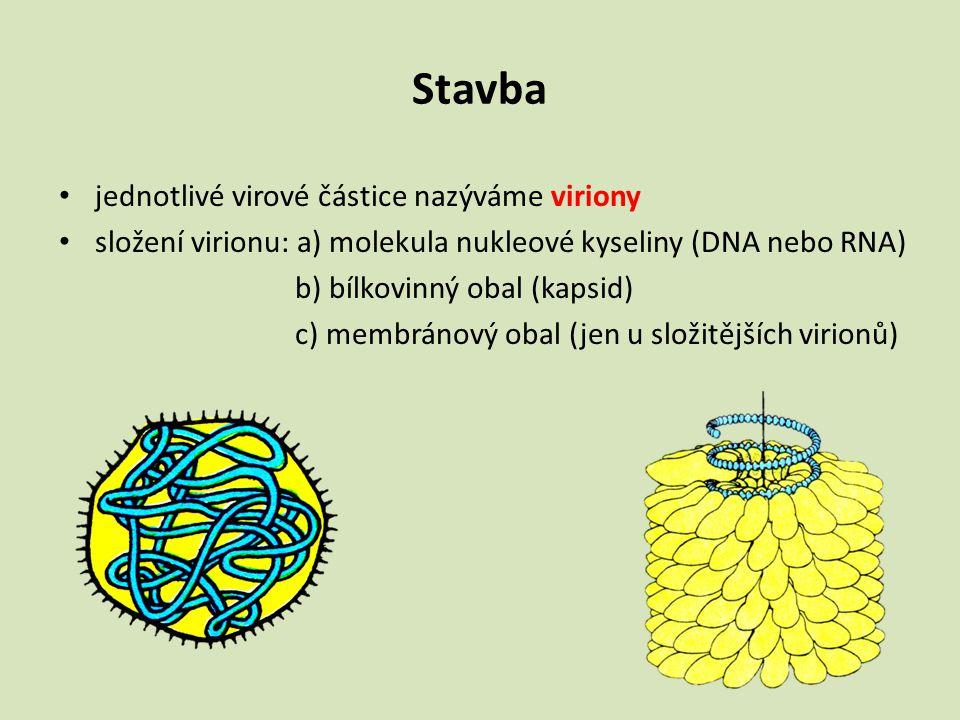 Stavba jednotlivé virové částice nazýváme viriony složení virionu: a) molekula nukleové kyseliny (DNA nebo RNA) b) bílkovinný obal (kapsid) c) membrán
