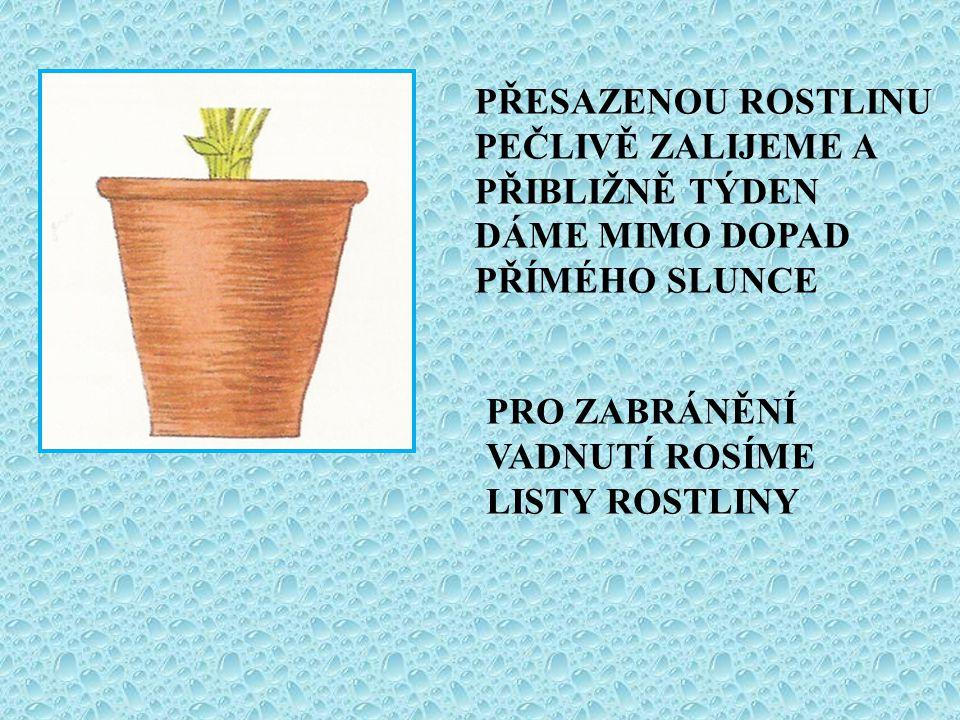 POKOJOVÉ ROSTLINY D.G.HESSAYON,ANGLICKÝ ORIGINÁL THE HOUSE PLANT EXPERT, TRANSWORLD PUBLISHERS LTD., V LONDÝNĚ 1994, PŘELOŽIL Ing.