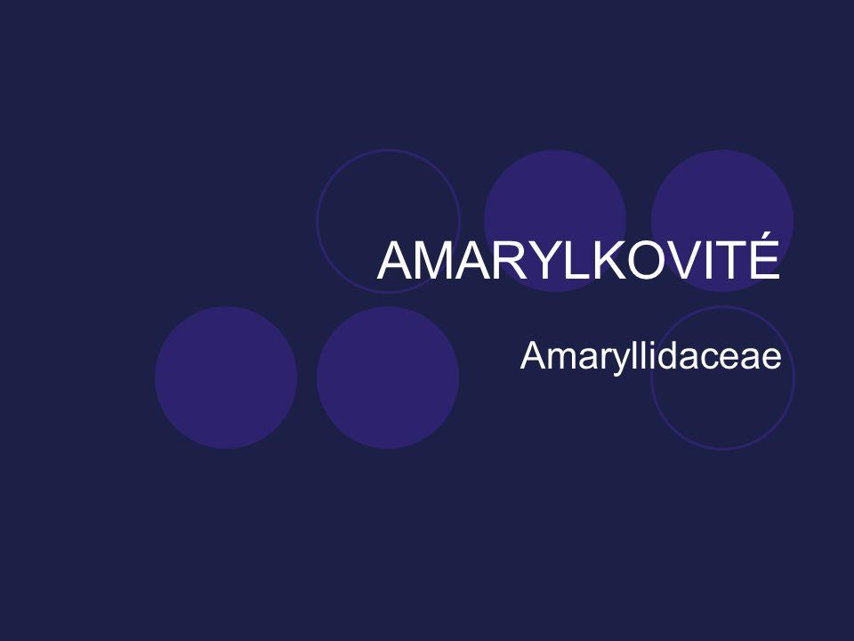 AMARYLKOVITÉ Amaryllidaceae