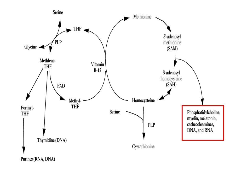 hypochromní mikrocytární anémie makrocytární anémie hypersegmentovaný neutrofil