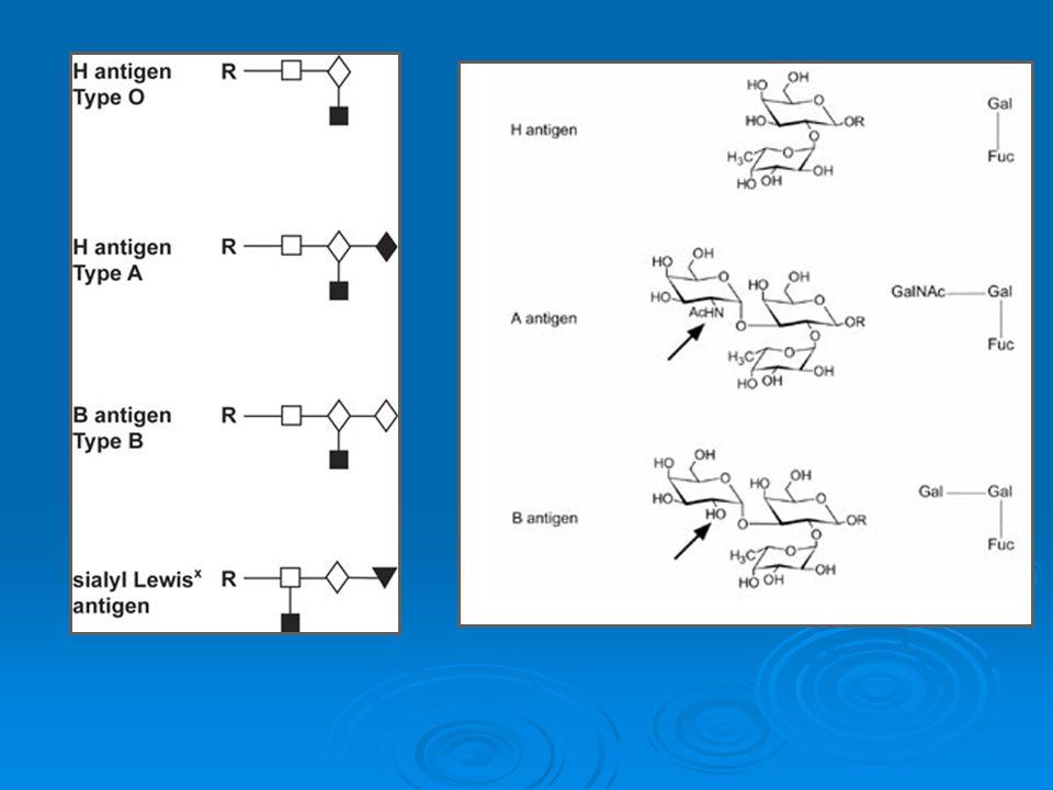 Vyšetření krevních skupin  ABO systém - vyšetření RBC pomocí diagnostických sér anti-A - vyšetření RBC pomocí diagnostických sér anti-A a anti-B a anti-B - vyšetření sérových aglutininů anti-A a anti-B pomocí typových erytrocytů - vyšetření sérových aglutininů anti-A a anti-B pomocí typových erytrocytů  Rh(D) systém - vyšetření pomocí anti-Rh(D) séra - vyšetření pomocí anti-Rh(D) séra