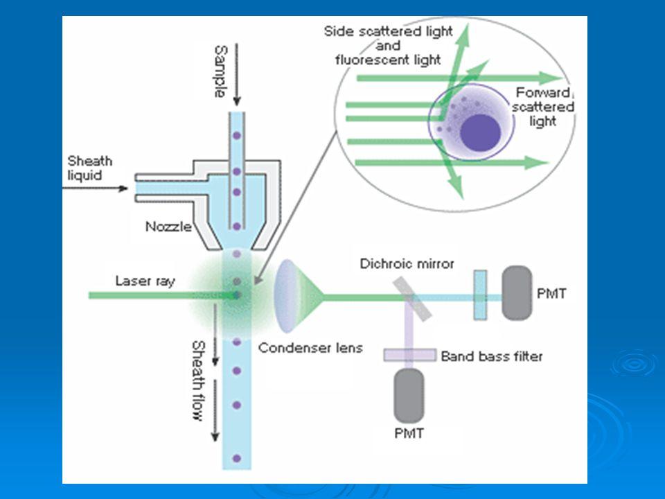   Užití v hematologii: imunofenotypizace myeloproliferací a lymfoproliferací pomocí fluorescenčně značených monoklonálních protilátek