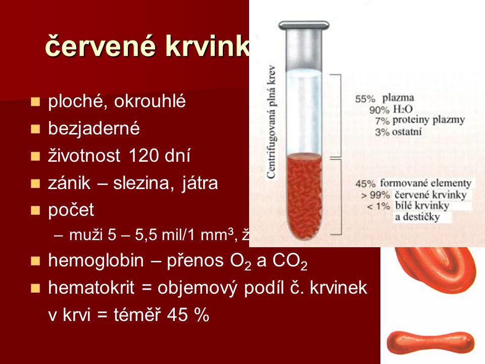 červené krvinky (erytrocyty) ploché, okrouhlé bezjaderné životnost 120 dní zánik – slezina, játra počet –muži 5 – 5,5 mil/1 mm 3, ženy 4,5 mil/1 mm 3