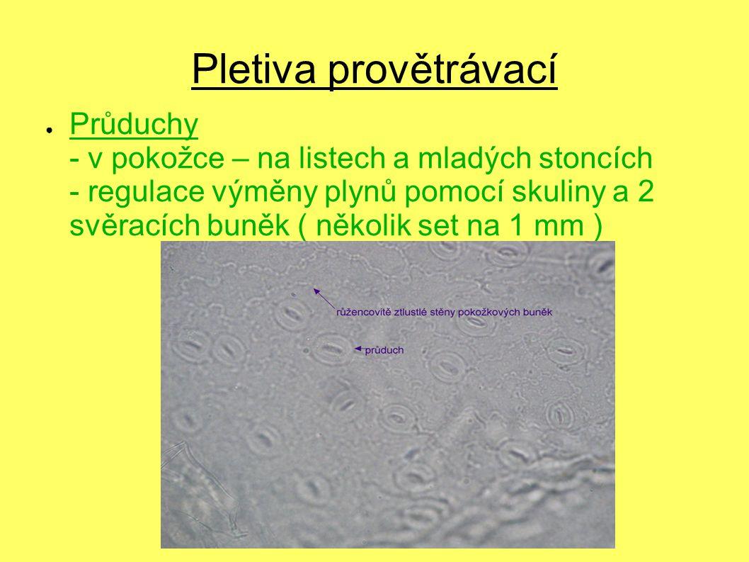 Pletiva provětrávací ● Průduchy - v pokožce – na listech a mladých stoncích - regulace výměny plynů pomocí skuliny a 2 svěracích buněk ( několik set n