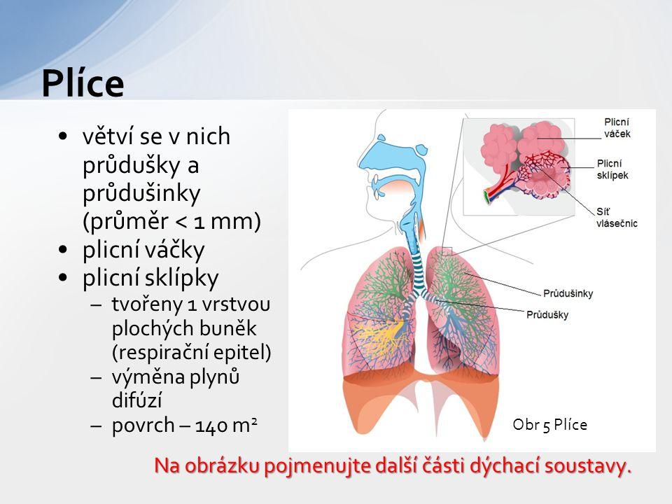 větví se v nich průdušky a průdušinky (průměr < 1 mm) plicní váčky plicní sklípky –tvořeny 1 vrstvou plochých buněk (respirační epitel) –výměna plynů