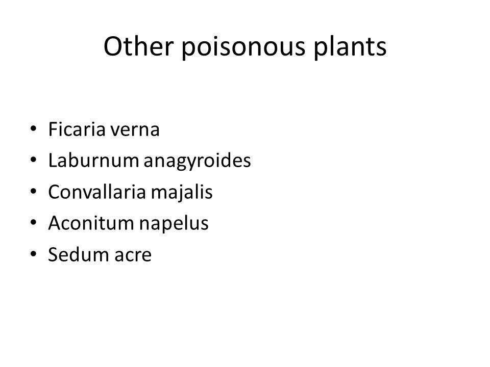 Other poisonous plants Ficaria verna Laburnum anagyroides Convallaria majalis Aconitum napelus Sedum acre