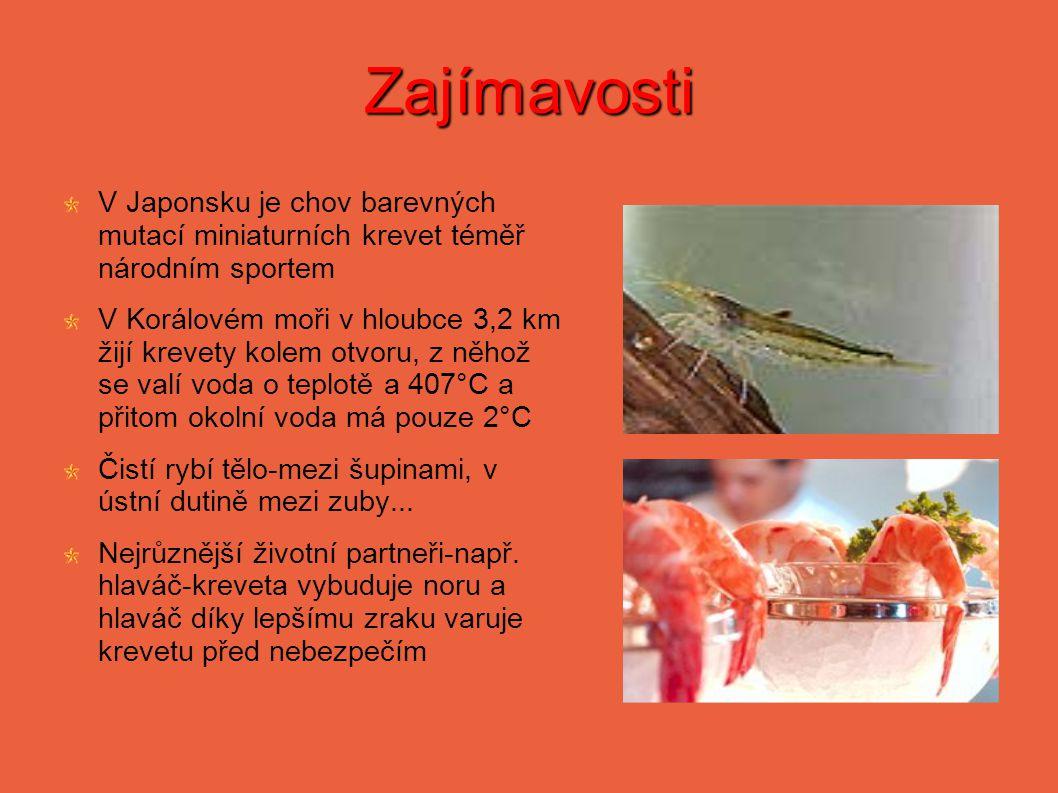 Zajímavosti V Japonsku je chov barevných mutací miniaturních krevet téměř národním sportem V Korálovém moři v hloubce 3,2 km žijí krevety kolem otvoru, z něhož se valí voda o teplotě a 407°C a přitom okolní voda má pouze 2°C Čistí rybí tělo-mezi šupinami, v ústní dutině mezi zuby...